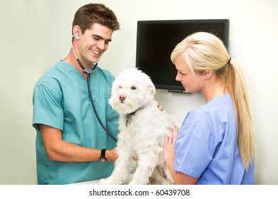 A dog at the vet having his heart rate measured