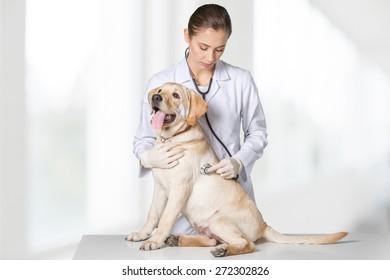 Dog, veterinarian, white.