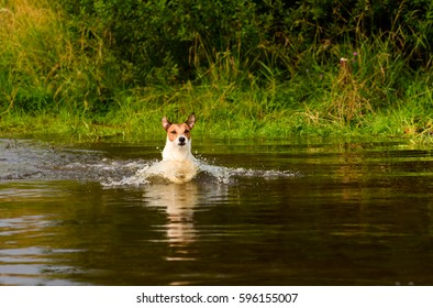 Dog wading across river at ford