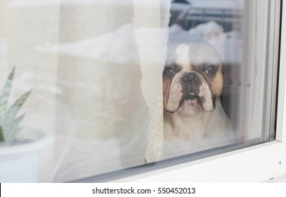 dog waiting for the arrival of owners