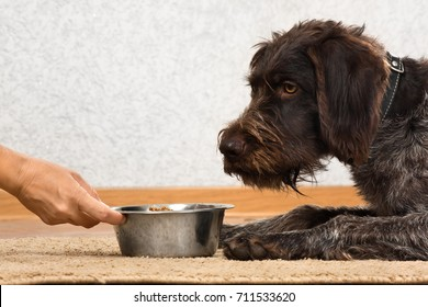dog waiting a food and hand of woman holding a bowl with food