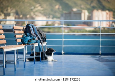 The dog waiting for the luggage on the ferry entering the harbor. Black and White Border Collie.