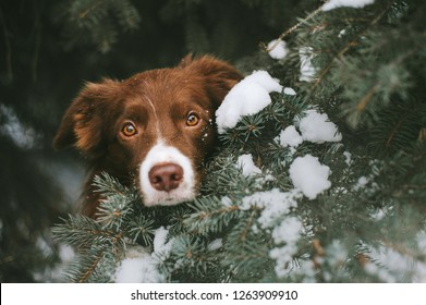 Dog is waiting for new year in christmas tree with a lot of snow
