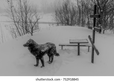 The dog is waiting next to the grave in winter, Samara, Russia
