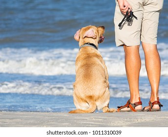 Dog Waiting On The Beach To Play