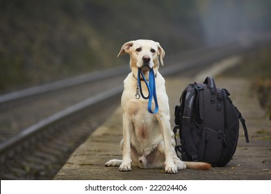 Dog is waiting for the owner on the railway platform