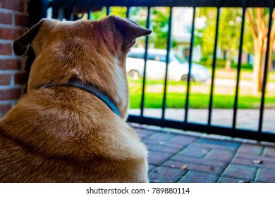 Dog Waiting for Owner to Return