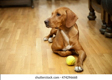 Dog waiting to play in house