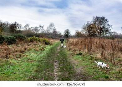 Dog walk English Country