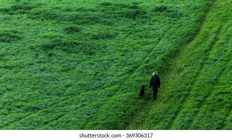 Dog walk in the meadow