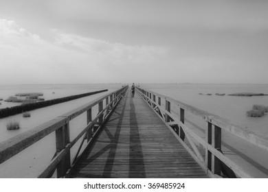 Dog walk on pier