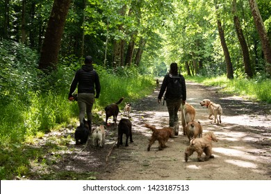 Dog walk service. Young man and woman (unrecognizable; back view) walking out the dogs in Vincennes forest of Paris, France in sunny day. Seniors often use the service of professional dog walkers.