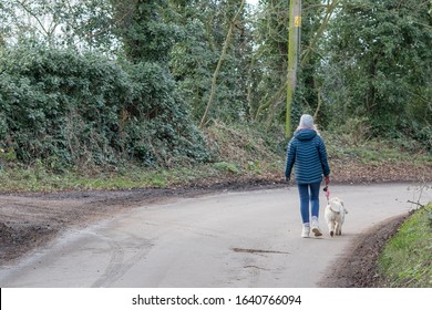 Dog walker alone on quiet country lane. Walking on the road. Single female in winter coat with dog on a lead from behind. Walking away in the countryside.