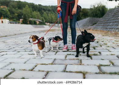 Dog walker with dogs enjoying outdoors.
