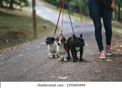Dog walker with dogs enjoying in park.
