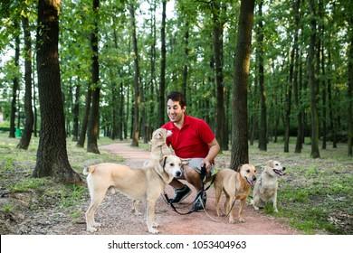 Dog walker with dogs enjoying in walk.