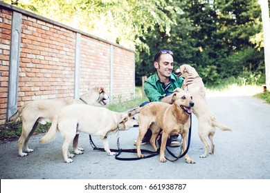Dog walker with dogs enjoying in walk. Selective focus on man.