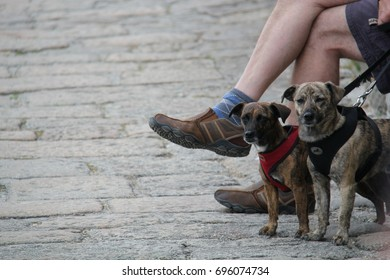dog walker sitting next to two medium-sized dogs on a leash