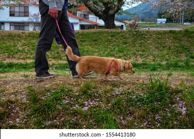 Dog walker strides with his pet on leash while walking at lawn in garden.