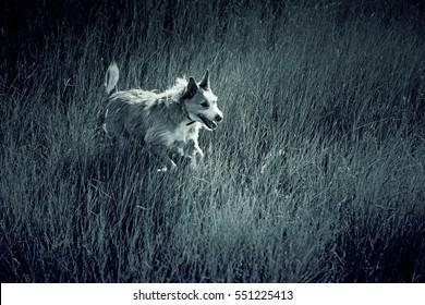 Dog walking arid countryside, animals and nature