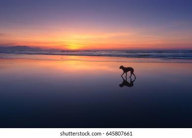 dog walking in the beach