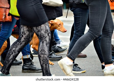 Dog in walking crowd