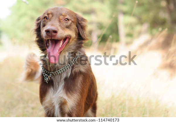 Dog walking in the forest