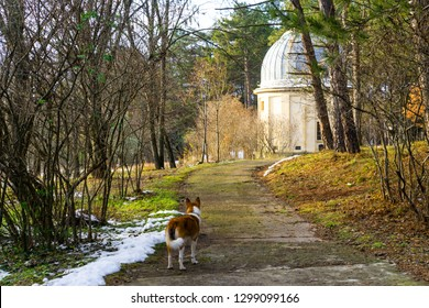 The dog walking to the old telescope. The Crimean astrophysical observatory