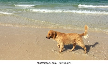 The dog walking on the beach