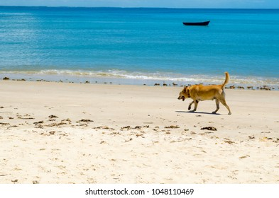 Dog walking on the sand of a sunny beach. The scene is composed of a beautiful blue sea and a canoe in the background.