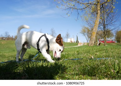 Dog is walking at the park