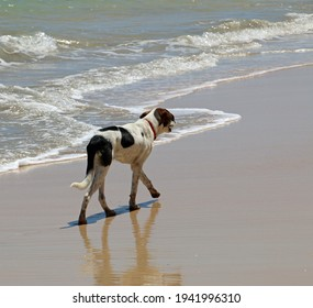 A dog walking at the seaside, some small waves in the background