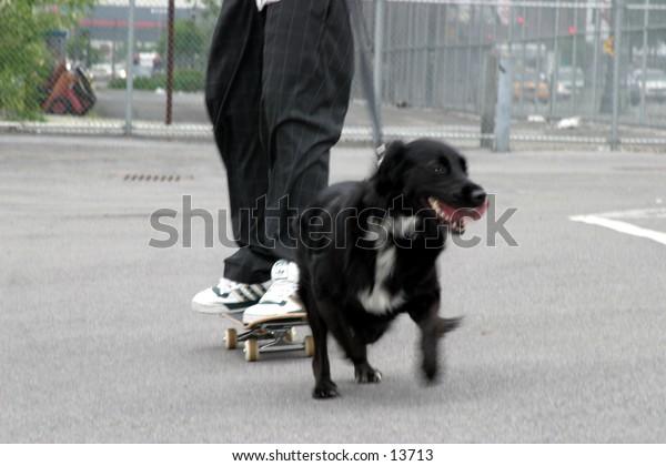 dog walking skateboard