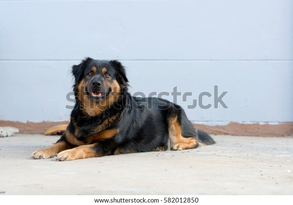 dog walking sleeping and playing