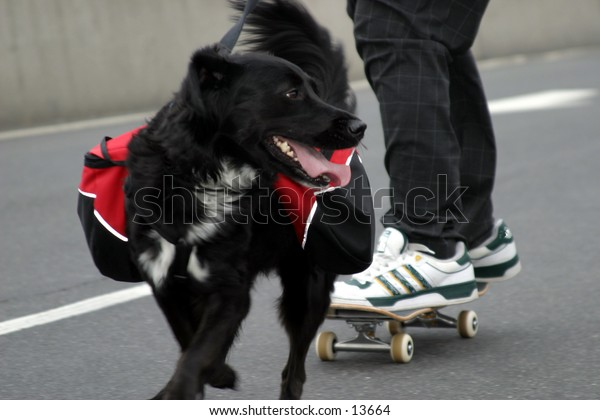 dog walking young man on skateboard