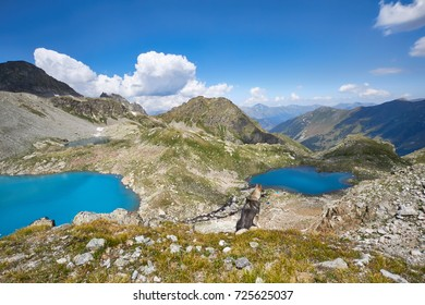 Dog walks in the mountains against the blue of lakes, the Caucasus Arkhyz. The year of the dog. The beauty of the mountains, fabulous views of the lake