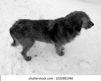 A dog walks outside in the courtyard