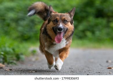 dog walks toward camera down path