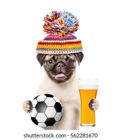 7e31531dc33 Dog in warm hat holding a soccer ball and light beer. Isolated on white  background
