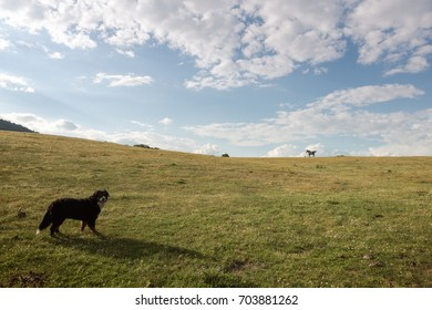 Dog watches at horse running free through the green valley