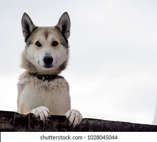 The dog watches over his house.The dog guards the house, the watchman on the street.