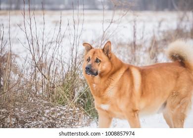 Dog watching away