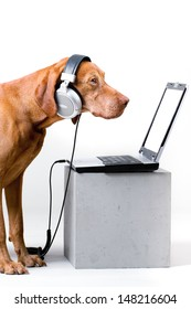 A dog watching and listening to your content on laptop