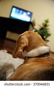 Dog watching TV laying in living room