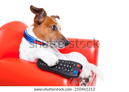 Dog Watching Tv Movie Sitting On Stock Photo Edit Now 210461212