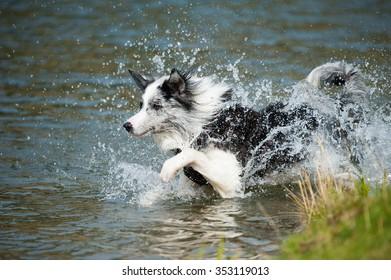 Dog at water