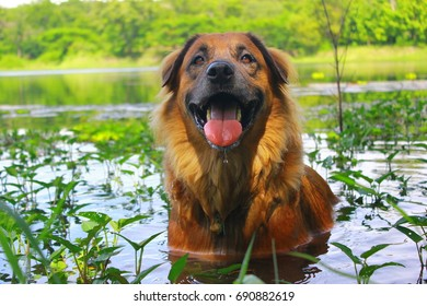 Dog in the water.