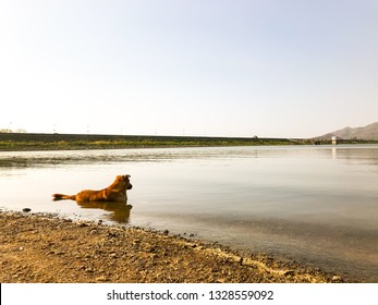 A dog in water because the weather is hot
