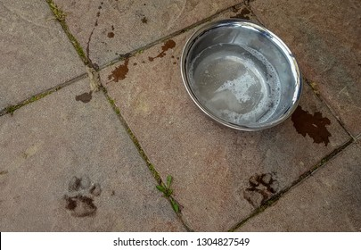 dog water bowl recently used, with paw prints in front
