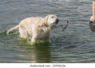 Dog in water and enjoy it